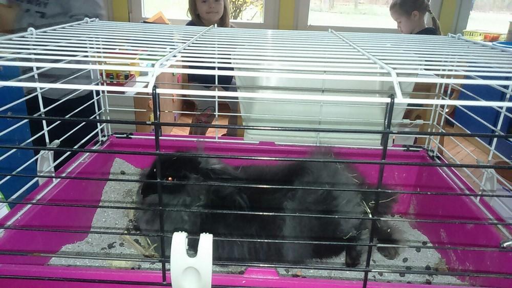 Djeca iz odgojne skupine Zečići ugostili zečicu Cici