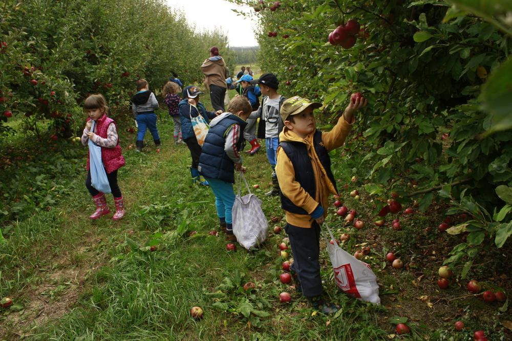 Izlet na plantažu jabuka u Donju Vlahiničku
